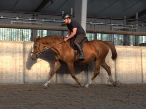 Start sport- en revalidatietrainers opleiding Equicare-Plus Nederland @ Hoevelaken